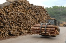 Почти 16 млрд. рублей планируется инвестировать в лесную отрасль края до 2020 года