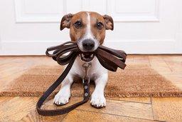 Депутаты Закдумы намерены штрафовать за собак без поводка
