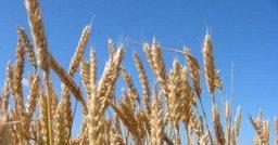 Правительство России выделило средства на восстановление почв сельхозземель в ДФО