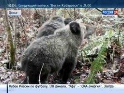 Медведь растерзал 65-летнего охотника в Вяземском районе