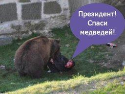 Хабаровчане просят Владимира Путина спасти медведей от отстрела