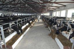 В Хабаровском крае увеличена господдержка на создание малых животноводческих ферм
