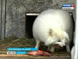 """В зооцентре """"Питон"""" продолжают пополнять коллекцию дальневосточных животных"""