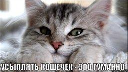 Минюст признал правомерным закон об эвтаназии бездомных животных в Хабаровском крае