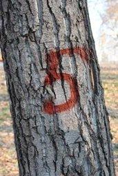 В городском парке «Динамо» работает комиссия, оценивающая состояние деревьев