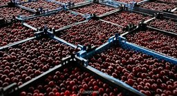 Хабаровский край заинтересован в кыргызских яблоках