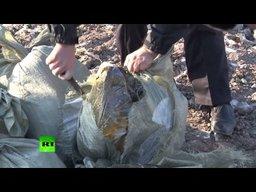 В Хабаровске уничтожено бульдозером 511 кг чёрной икры
