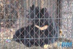 """—отрудники ÷ентра реабилитации диких животных Ђ""""тЄсї построили дл¤ маленьких гималайских медвежат искусственные берлоги"""