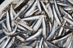 Минвостокразвития ждет предложений общественности по вопросам развития аквакультуры