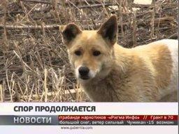 Хабаровские депутаты выслушали доводы хабаровских зоозащитников по вопросу эвтаназии животных