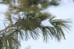 Свыше тысячи деревьев должны высадить специалисты МБУ «Горзеленстрой» в парке «Динамо» в рамках его реконструкции