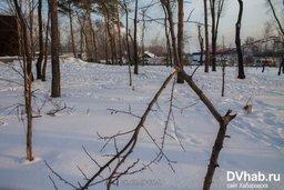 Вандалы выломали деревья, высаженные к 70-летию Победы в Великой Отечественной Войне в Хабаровске