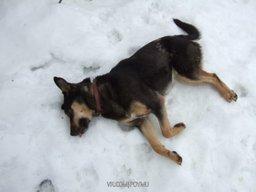 Массовая гибель собак от яда догхантеров произошла в разных районах Хабаровска