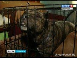 Хабаровские зоозащитники оборудовали новый дом для бездомных животных