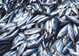 Улов рыбопромышленников края в январе почти на 10% превысил уровень первого месяца прошлого года