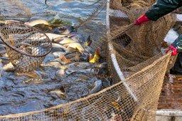 Минвостокразвития участвует в подготовке предложений по развитию рыбохозяйственного комплекса
