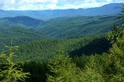В Хабаровском крае объявлен конкурс для журналистов на тему охраны лесов