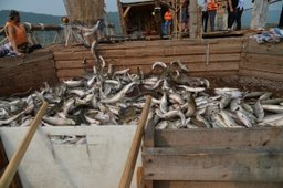 Строительство рыболовных судов планируется возобновить на предприятиях края