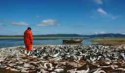 На территории Дальневосточного федерального округа формируется рыбоперерабатывающий кластер