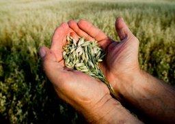 Агрономы края прошли курс эффективного земледелия
