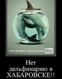 Хабаровские зоозащитники выступили против дельфинария, который появился на арене Ерофей