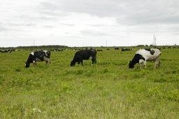 Около 59 млн рублей получит Хабаровский край на поддержку начинающих фермеров