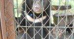Фонд Брижит Бардо взял на содержание трех медвежат в Хабаровском крае