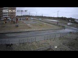 Стая собак напала на мужчину в Хабаровске