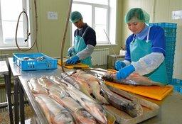 Выпуск рыбной продукции высокой степени переработки вырос в крае