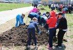 Аллею из 120 саженцев фруктовых деревьев заложили в Хабаровске