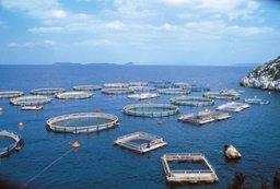 В Государственной Думе обсудили реализацию поручений Президента по развитию рыбной отрасли