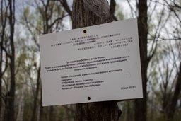 Японский лес дружбы на Хехцире