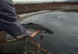 Юрий Трутнев: рыболовство для Дальнего Востока - одно из магистральных направлений