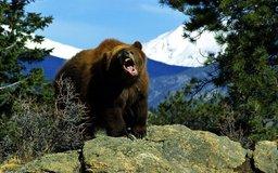Хищный медведь убил сторожа строительной организации около вахтовой базы рабочих