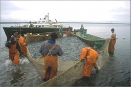 Закон о рыболовстве может быть рассмотрен Госдумой в весеннюю сессию