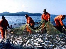 Инвестиционные квоты открывают новые горизонты для рыбной отрасли