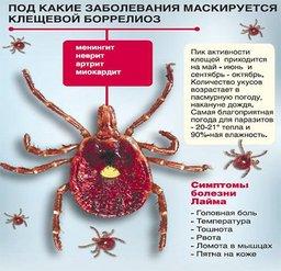 Случай заражения клещевым боррелиозом зафиксировали в Хабаровске