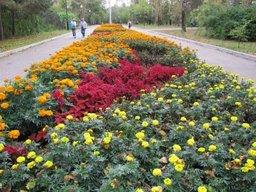 В Хабаровске активизировались цветочные воры