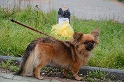 Половина стоек с пакетами для собак в Хабаровске исчезла в первый же день