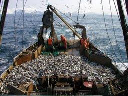 Госдума приняла закон «О рыболовстве и сохранении водных биологических ресурсов»