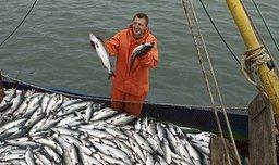 Сенаторы проголосовали за инвестиционные квоты для развития рыбохозяйственной отрасли