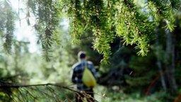 Как не потеряться в лесу: рекомендации спасателей