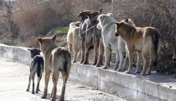 Случаи заражения трихинеллезом из-за употребления собачатины зарегистрированы в Хабаровском крае