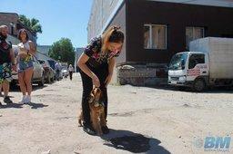 Хабаровчане и их собаки устроили совместное барбекю