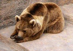 Медведи держат в страхе жителей села в Хабаровском крае