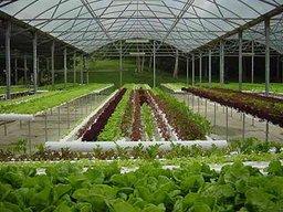 Три дальневосточных региона получат субсидии на экономически значимые программы в области растениеводства