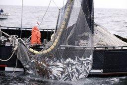 Александр Галушка: японские предприниматели могут получить квоты на вылов рыбы на Дальнем Востоке