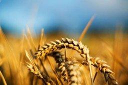 На ВЭФ планируется обсудить создание российско-японского агрофонда