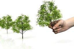 Завтра, 15 июля в Советско-Гаванском муниципальном районе состоится обсуждение государственной программы края «Развитие лесного хозяйства в Хабаровском крае»