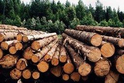 В ТОР «Комсомольск» будут перерабатывать древесину
